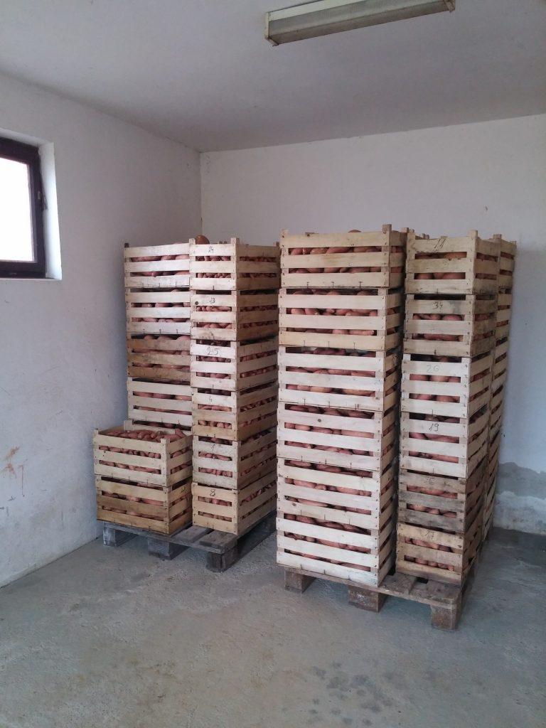 skladište batata